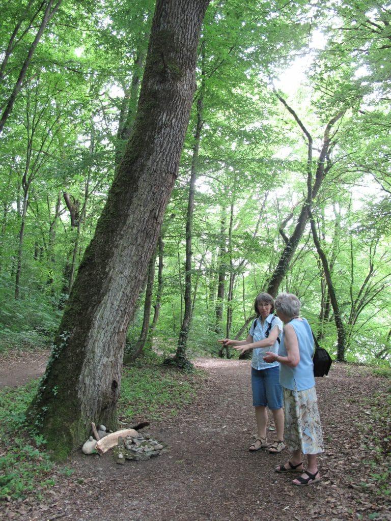 Rencontre avec une promeneuse lors de la création d'un landart au pied d'un arbre.